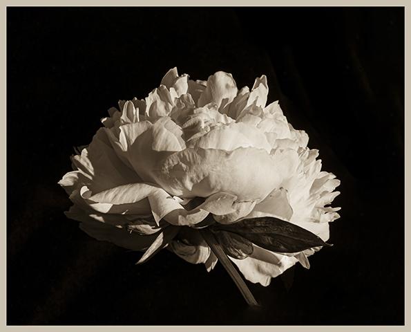Photographies noir et blanc